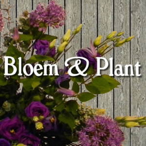 Klaas Droog Bloem & Plant logo