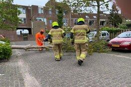 Boom omgewaaid in Enkhuizen