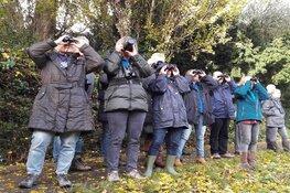 Vogelcursus: Trekvogels en wintergasten
