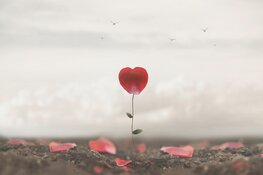 Uitvaartzorg en Eenzaamheid, geen gekke combinatie