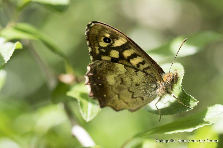 Vlinders in voor- en tegenspoed