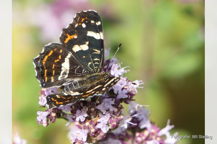 Vlinders en libellen spotten in het Streekbos Bovenkarspel