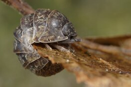 Met IVN op zoek naar bodembeestjes in het Streekbos