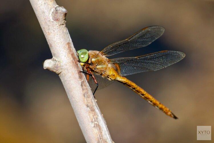 Ontdek de wereld van de libelle!