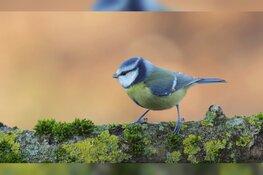 Tuinvogels herkennen
