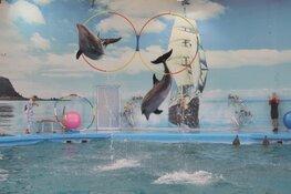 Dierenorganisatie World Animal Protection start SMS-actie voor dolfijnen
